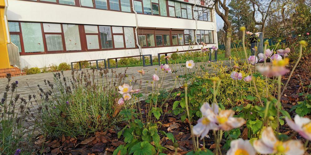 Mokyklos kieme žydi gėlės